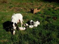 Mamma e cuccioli